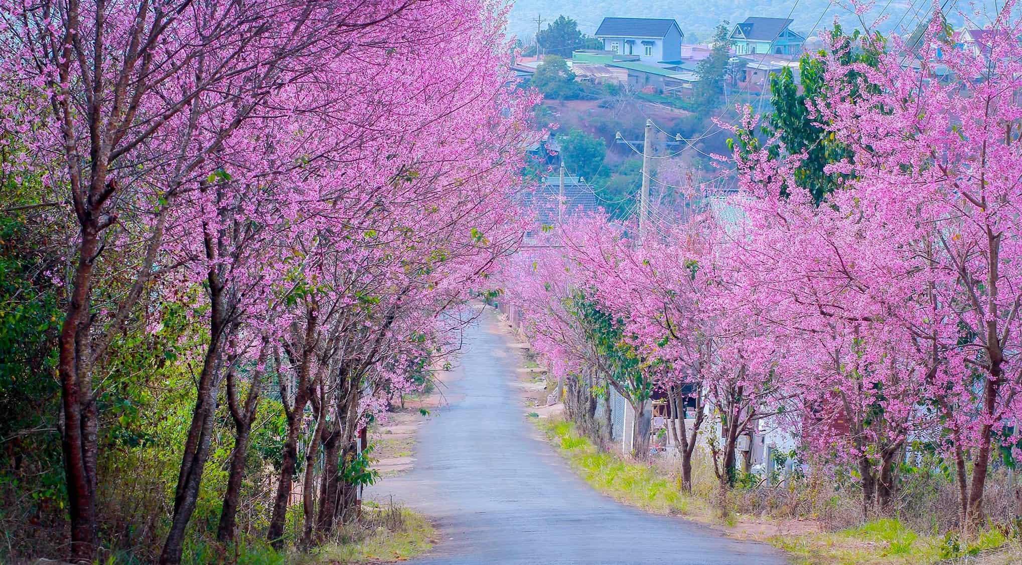 Đi đâu ở Đà Lạt vào mùa xuân?