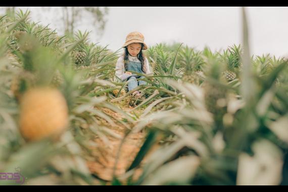 Đồi dứa Bắc Giang - Lạc vào thảo nguyên xanh mướt ở vùng nông thôn trời Âu