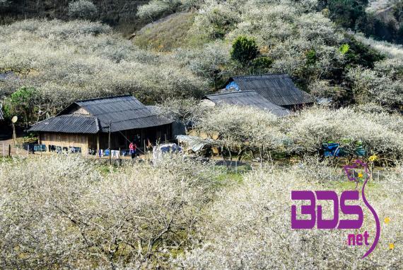 Bản Thung Cuông (Thông Cuông) - Ngôi làng nhỏ bé giữa những sườn đồi xanh mộng mơ