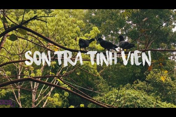 Sơn Trà Tịnh Viên - Du khách như đến với một góc nhỏ Việt xưa