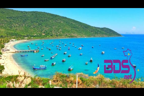Vịnh Vân Phong - Thiên đường san hô với muôn loài san hô đủ màu sắc