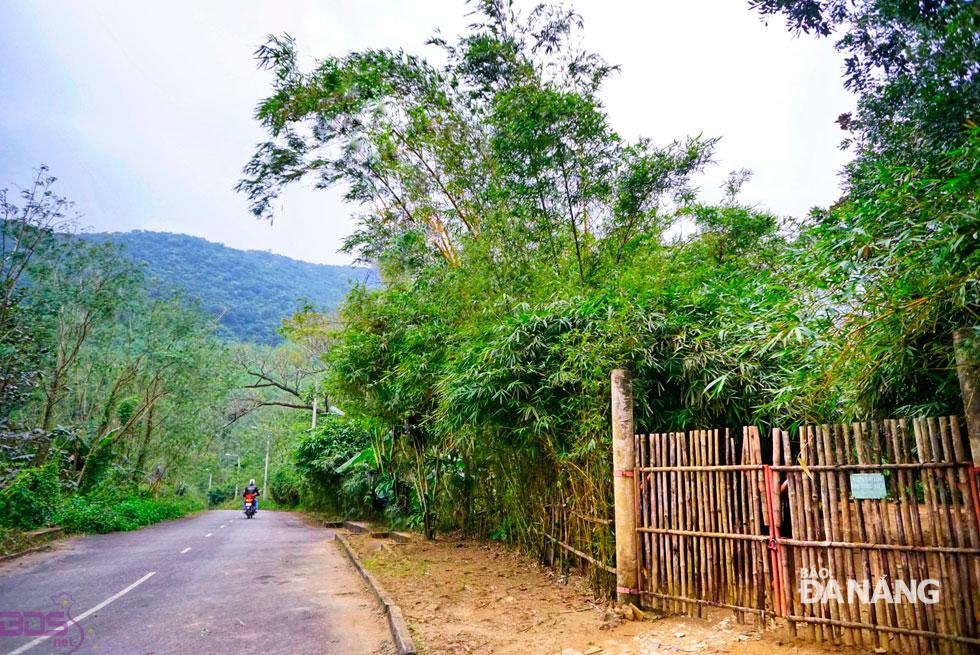 Đường đến Sơn Trà Tịnh Viên