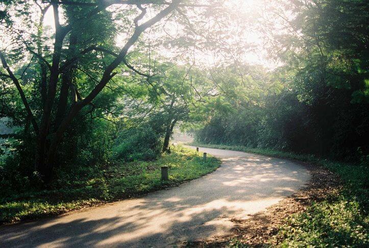 Đường trong Rừng Ba Vì