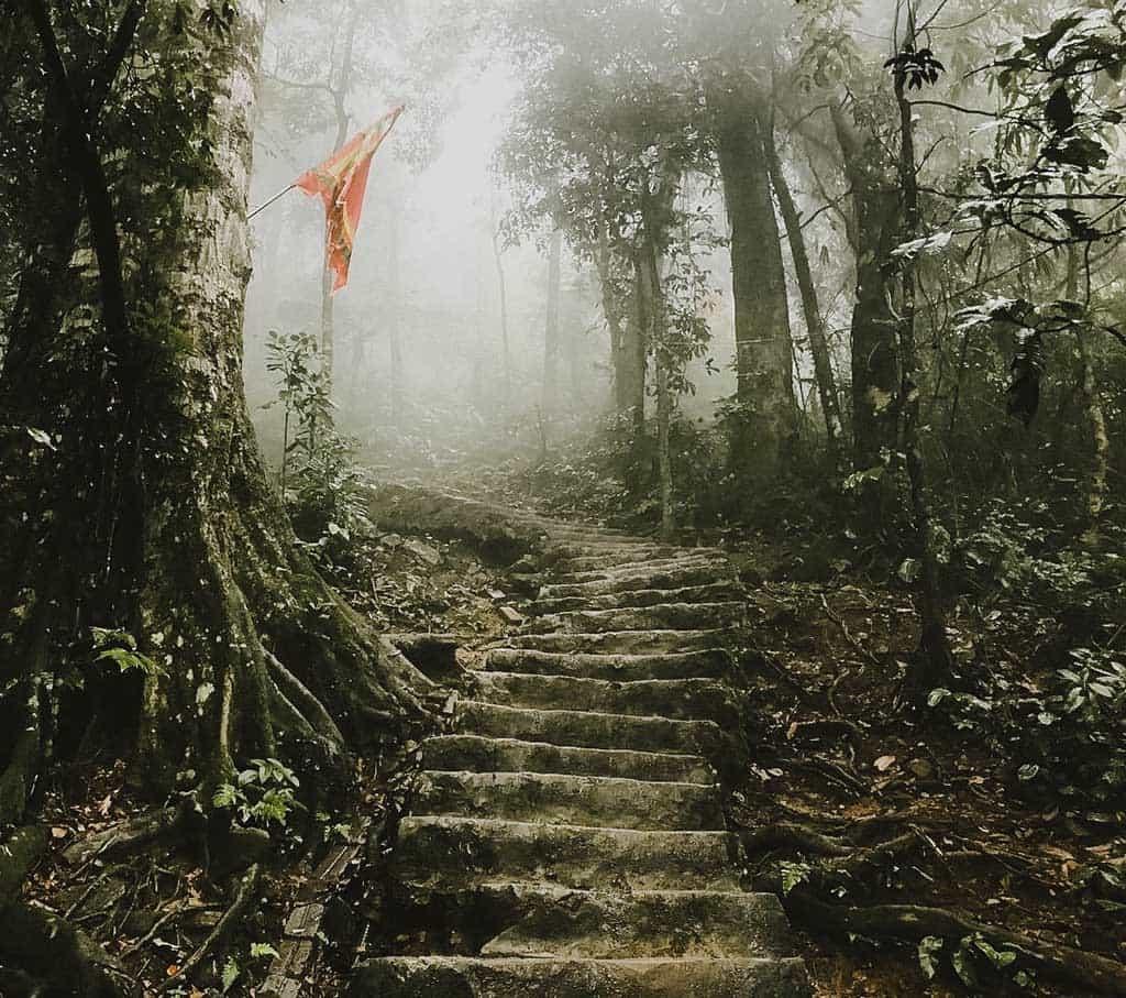 Một góc rừng Ba Vì