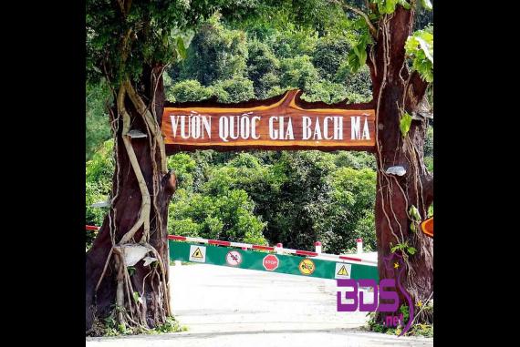 Vườn Quốc Gia Bạch Mã - Cẩm nang VQG Bạch Mã chi tiết từ bản đồ, giá vé, có gì hấp dẫn….